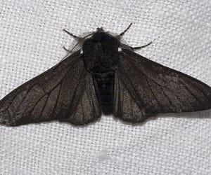 moth, black, and bug image