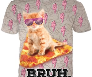 fashion, funny animals, and kitty image