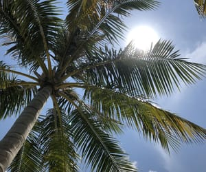 fun, palm, and trees image