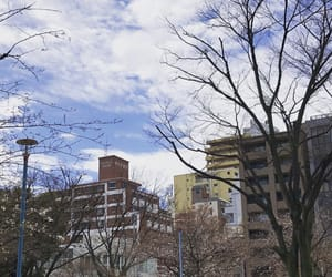 buildings, cherry blossoms, and city image