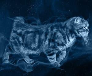 cat, manx cat, and patronus image