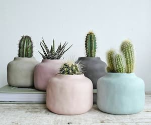 pastel, cactus, and plants image