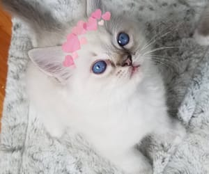 adorable, baby, and little cat image