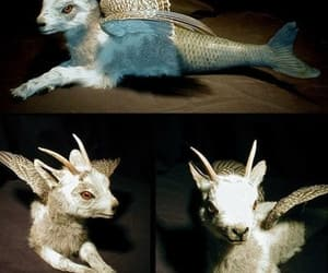 goat, capricorn, and mythical creature image
