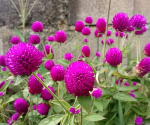bright, photo, and purple image