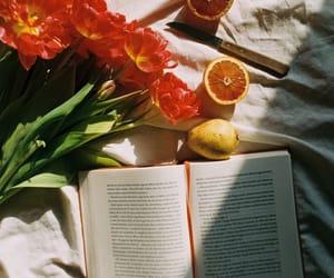 book, books, and orange image