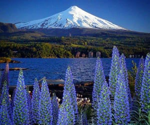beautiful places, chile, and flowers image