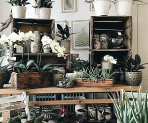 aesthetic, cactus, and decor image