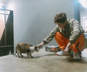 cat, gif, and Ikon image