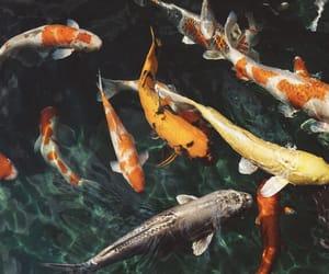 animal, fish, and water image