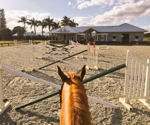 escape, genuine, and horse image