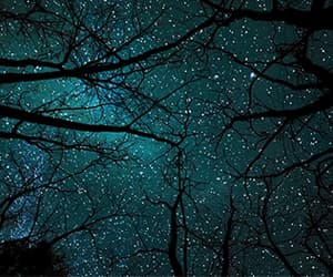 gif and night sky & tree image