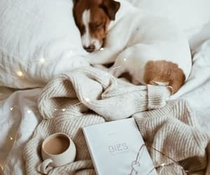 animals, comfy, and cosy image
