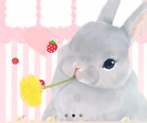 bunny, iphone, and kawaii image