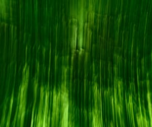 abstract photography, aesthetic, and green image
