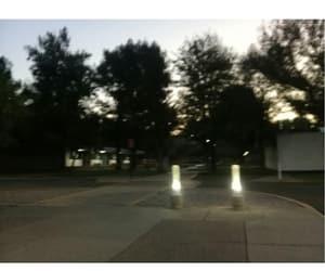arboles, morning, and tree image