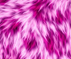 fur and wallpapers image