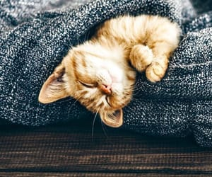 animal, cat, and cozy image