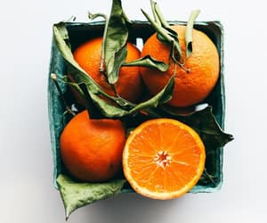 orange, fruit, and photography image