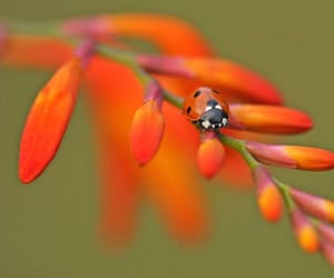 flowers, ladybird, and insects image