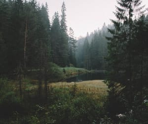 nature, forest, and wander image