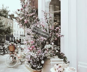 flowers, pink, and shop image