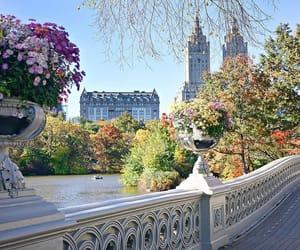city, flowers, and bridge image