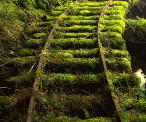 green, moss, and nature image