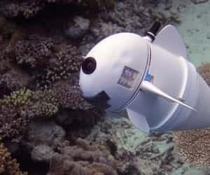 drone, fish, and robotics image