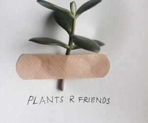 plants, aesthetic, and tumblr image
