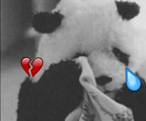 panda and sad image