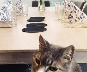 cat, food, and dinner image