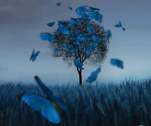 blue, butterflies, and night image