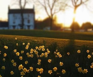 daffodils, easter, and photography image
