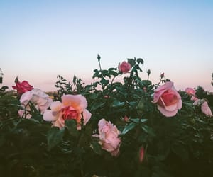 flowers, green, and roses image