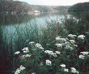 flowers, river, and water image