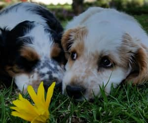 dogs, flower, and puppies image