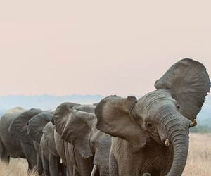 elephant, animal, and nature image