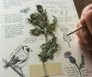 drawing, bird, and book image