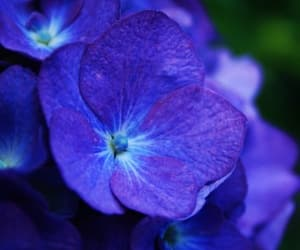 blue, flower, and nature image