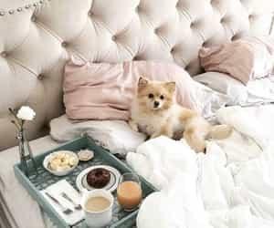 dog, breakfast, and animal image