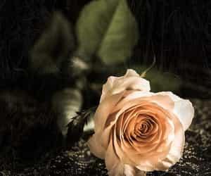 amazing, dark, and flower image