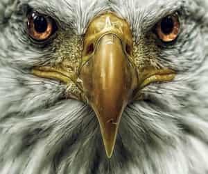 aesthetic, beak, and eagle image