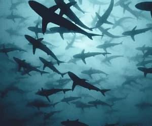gif, shark, and blue image