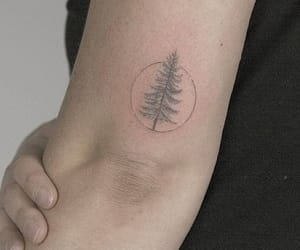 pine tree, tattoo, and tree image