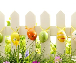 bunny, garden, and spring image