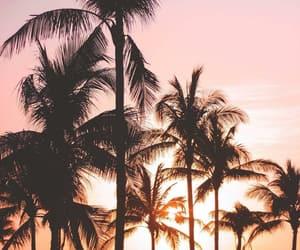 beautiful, summer, and orange image