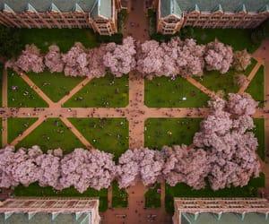 campus, washington, and school image