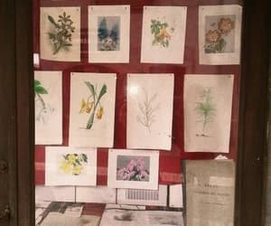 botanical, flowers, and plants image