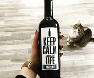 cats, life, and enjoy image